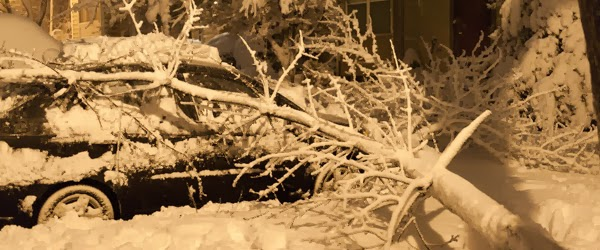 Image of snowy tree fallen on car